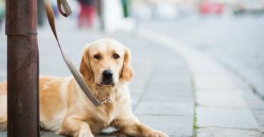 Pet Friday: animais também vão ter descontos no maior dia de promoções do ano
