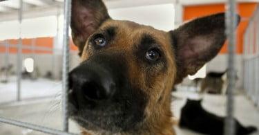 Bombeiros de Esposende já têm ambulância para animais