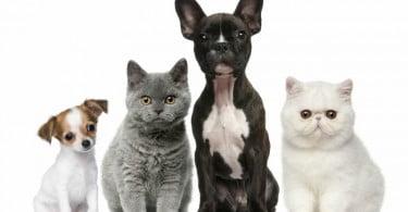 cachorro_gatinho_veterinariaatual