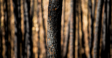 Governo revela número de animais mortos nos fogos de outubro