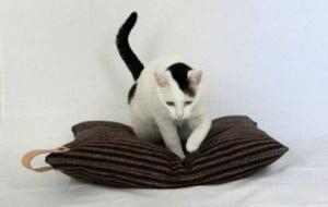 almofada para gatos