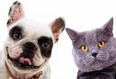 Um grupo de investigadores de Nashville, nos Estados Unidos da América, publicou recentemente um artigo na revista científica Frontiers in Neuroanatomy que indica que os cães possuem mais neurónios no córtex cerebral do que os gatos e que, por isso, são mais inteligentes.