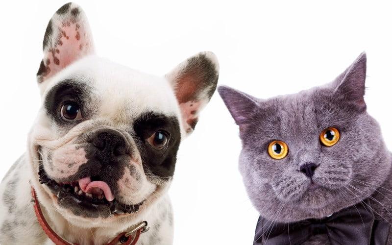 Sintra debate 'Transtorno de Acumulação: Direito, Bem-Estar Animal e Saúde'