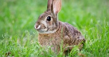 DGAV recolhe coelhos mortos em exploração de Estarreja