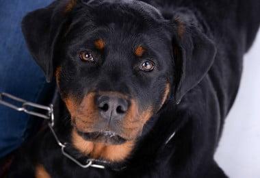 3 treinadores certificados, num ano em que já se registaram 1040 ataques de cães