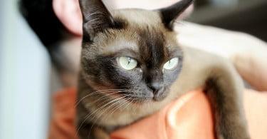 Síndrome de Noé: número de acumuladores de animais preocupa PAN