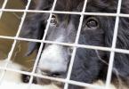 Centro de Recolha de Animais do Porto entra em obras