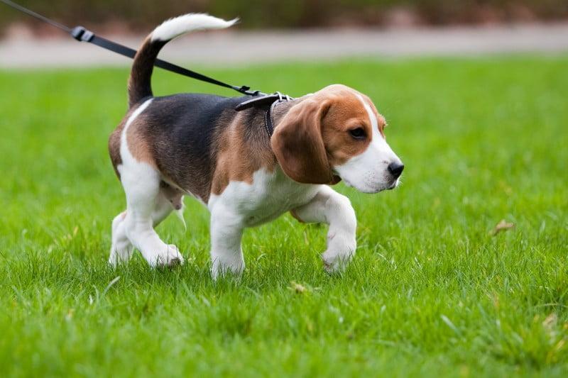 Instituto do Animal lança 'Carta de Cãodução'