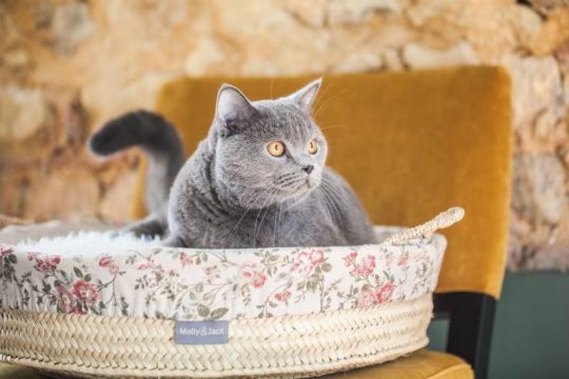 Veterinárias portuguesas criam marca de acessórios para pets