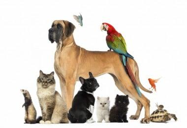 Pós-Graduação em Intervenção na Doença Comportamental em Animais de Companhia abre nova edição