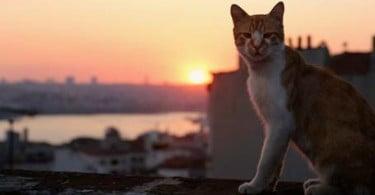 Documentário sobre 'Gatos' com antestreia solidária a 21 de janeiro