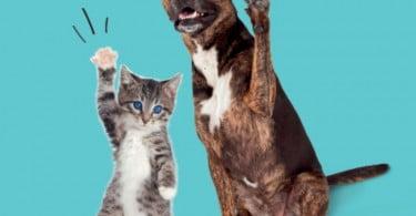 Intermarché cria plataforma para promover adoção de animais