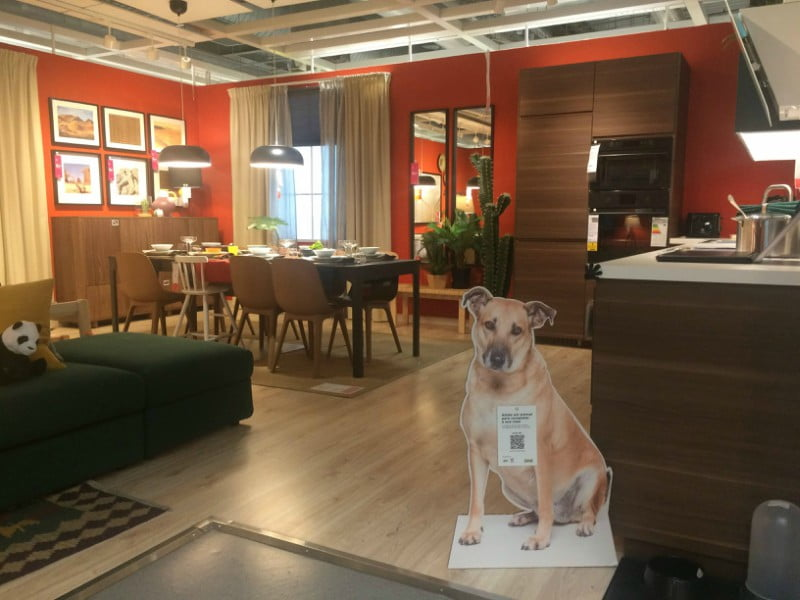 IKEA promove a adoção de animais
