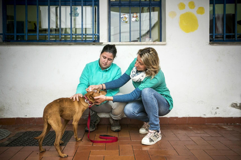 MargaridaCamara1-veterinariaatual