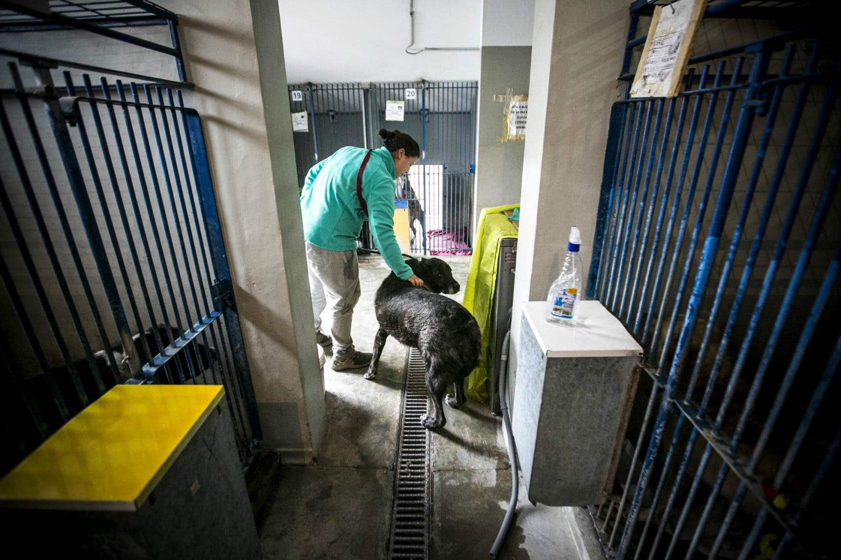 MargaridaCamara3-veterinariaatual