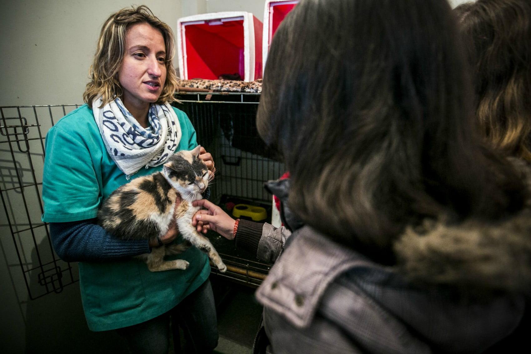 MargaridaCamara4-veterinariaatual