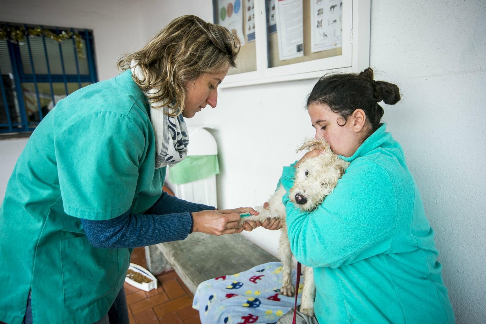 MargaridaCamara8-veterinariaatual