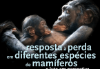 'O Luto em perspetiva': Universidade de Lisboa debate resposta à perda em diferentes espécies