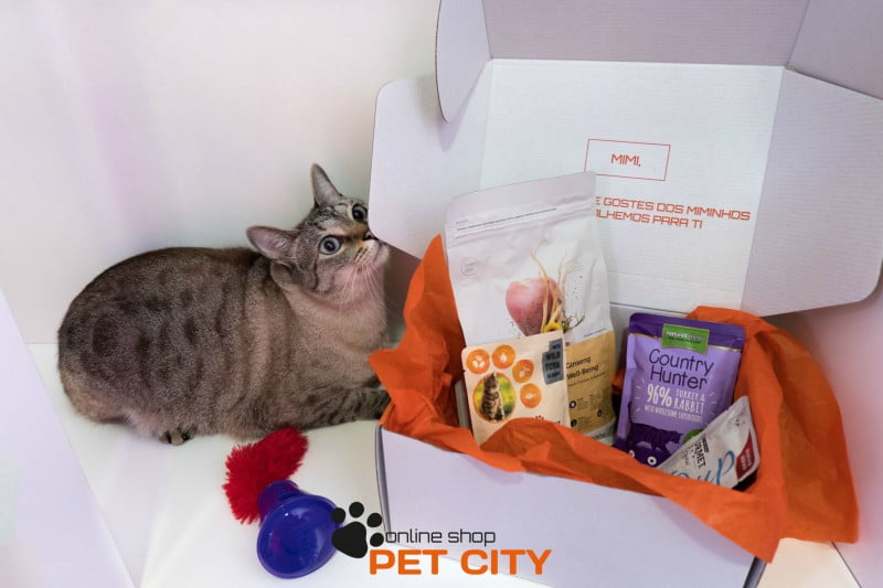 Pet City: a nova 'box' para animais 'Made in Portugal'
