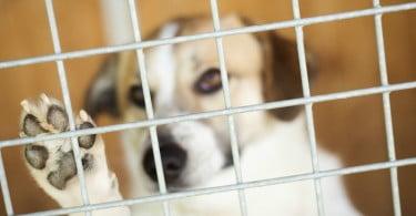 cão no canil Veterinária Atual
