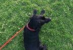 1200 ataques de cães foram registados em 2017