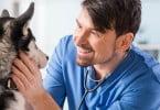 Aprovada alteração da carreira de médico veterinário municipal