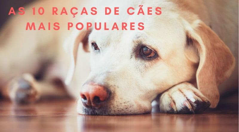 Infografia: as 10 raças de cães mais populares