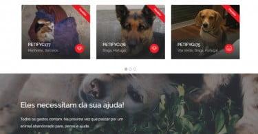 Petify: a plataforma nacional que quer facilitar a adoção de animais