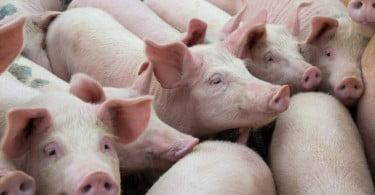 União Europeia cria centro de referência para o bem-estar animal