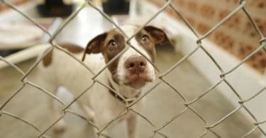 Depois da ameaça do adiamento da entrada em vigor da lei, por falta de preparação dos municípios para dar resposta, a proibição de abates nos canis municipais