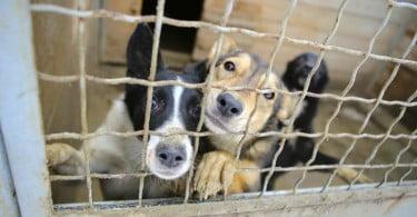 Provedora dos Animais de Lisboa recebe donativos para a União Zoófila