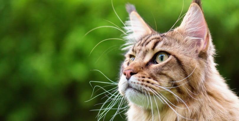 Partidos britânicos unem-se para criar políticas de defesa do bem-estar felino