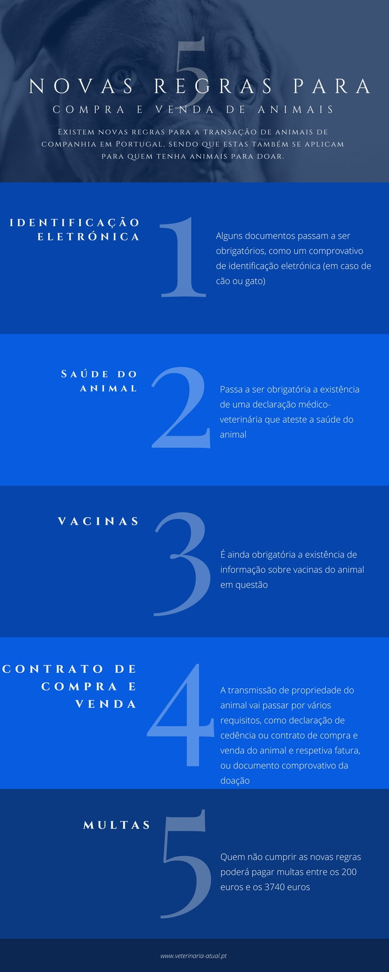 regras compra venda animais_veterinariaatual