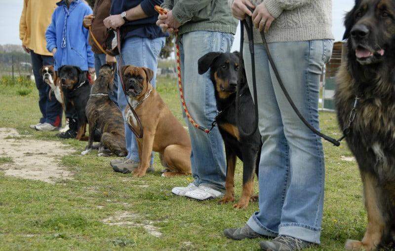"""Conferência no ISCPSI: """"Crimes contra animais são percursores de outros crimes"""""""