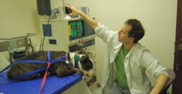 Brasil tem nova clínica especializada em hemodiálise para animais