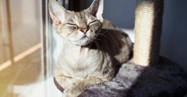 Royal Canin oferece um ano de alimentação aos gatos mais fotogénicos do país