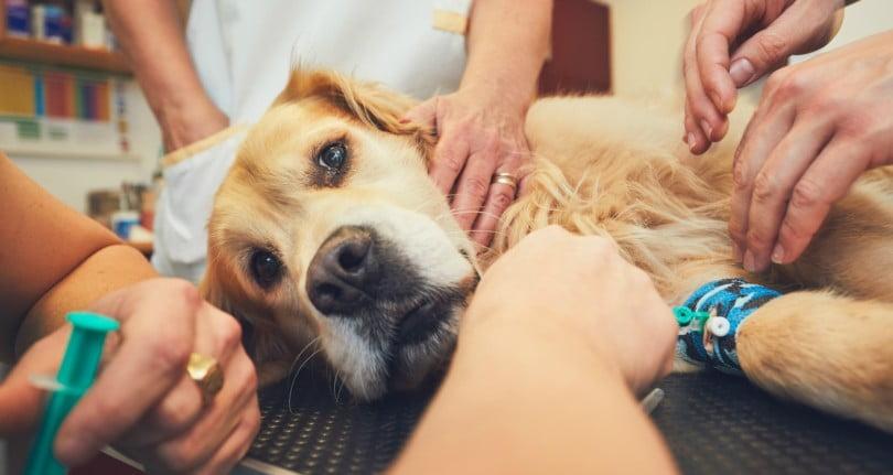 VetSummit: os veterinários sabem trabalhar em conjunto?