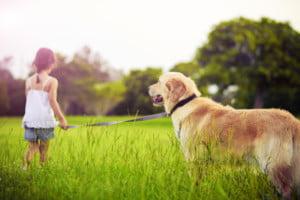 Associação portuguesa treina cães de assistência para doar a deficientes