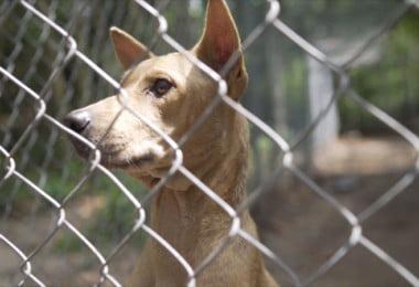 Eutanásia em canis municipais passa a ser proibida em setembro