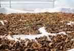Portugal já tem associação de produtores e transformadores de insetos
