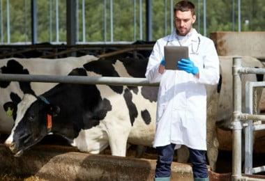 Inspetores veterinários da DGAV desmarcam greve