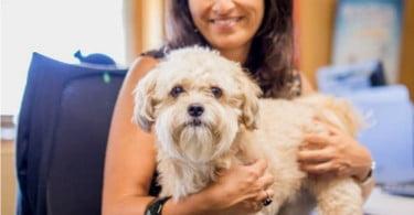 Colaboradores da sede da Nestlé Portugal já podem levar cães para o escritório
