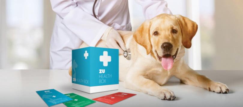 ZU lança plano de saúde anual para cães e gatos