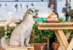 A partir desta semana, animais já entram em restaurantes
