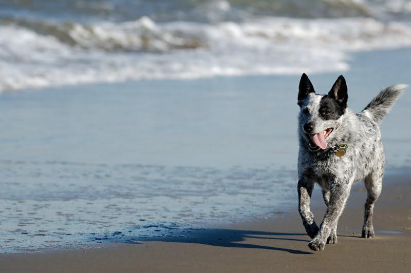 Esposende abre duas praias para cães