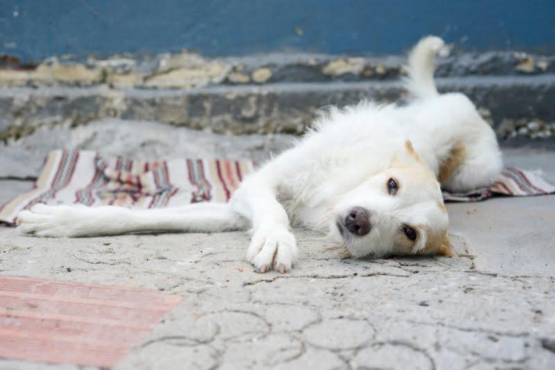 Provedora dos Animais pede isenção de taxas na fatura da água para a União Zoófila