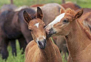 Empresa italiana começa a vender leite de égua