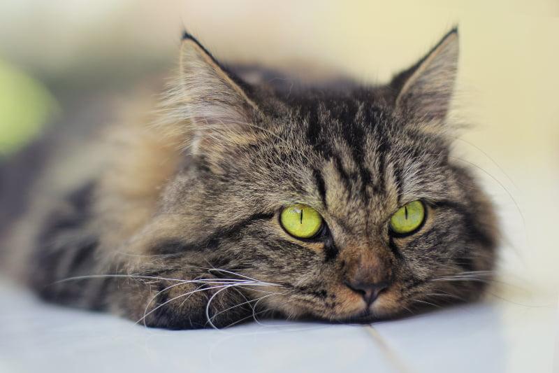 Um em cada quatro britânicos revela não ter pesquisado antes de comprar animal