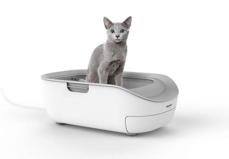Empresa japonesa cria liteira para gatos que deteta doenças
