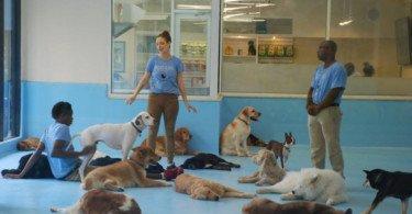 Quer brincar com um cão sem a responsabilidade de o adotar? Já é possível